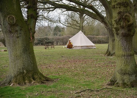 glamping-norfolk-gorsey-meadow-bell-tent-in-trees