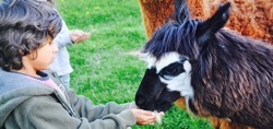 glamping-wales-drovers-rest-feeding-farm-animals