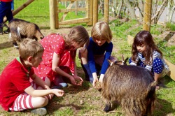 glamping-wales-drovers-rest-feeding-the-animals-on-the-farm