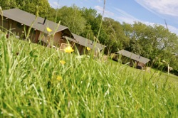 glamping-wales-drovers-rest-safari-tent-rows