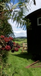 glamping-cornwall-hideaway-huts-pick-blackberries-s