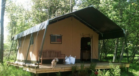 glamping-scotland-wild-wood-ruberslaw-tent-in-woods