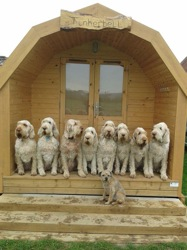glamping-norfolk-white-hall-farm-pods-dogs-welcome-s