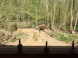 glamping-sussex-with-hot-tub-dernwood-farm-s