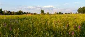 glamping-suffolk-and-norfolk-hidden-meadows-s