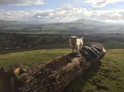 glamping-scotland-rubersview-pet-friendly-s