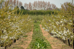 glamping-kent-fallow-fields-orchards-s