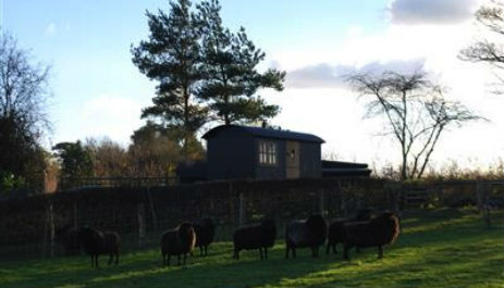 glamping-sussex-near-brighton-elsies-shepherds-hut-in-field
