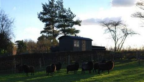 glamping-sussex-near-brighton-elsies-shepherds-hut-in-field