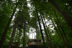 glamping-wales-redwood-valley-treehouse-cabin-in-trees-s