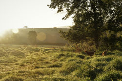 glamping-devon-oak-tree-lane-countryside