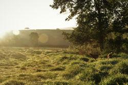 glamping-devon-oak-tree-lane-countryside