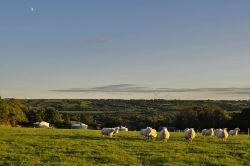 glamping-devon-oak-tree-lane-sheep