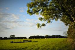 glamping-devon-oak-tree-lane-views