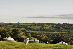 glamping-devon-oak-tree-lane-yurts-and-sheep