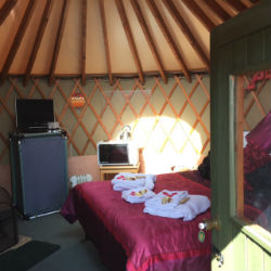 glamping-dorset-higher-manor-farm-holidays-linnet-s