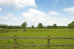 glamping-somerset-mollycroft-horses-field-s