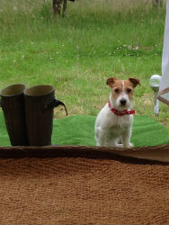 glamping-warwickshire-stratford-upon-avon-apple-farm-dogs-accepted-s