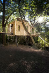 glamping-dorset-with-hot-tub-crafty-camping-treehouse-s-p
