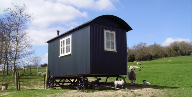 glamping-sussex-near-rye-hare-farm-shepherds-hut-lambs