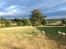 glamping-wales-the-yurt-farm-sheep