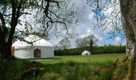 glamping-wales-the-yurt-farm-yurts-in-field