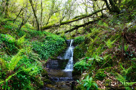 glamping-devon-longland-lodges-waterfall