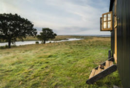 glamping-kent-elmley-nature-reserve-little-owl-s