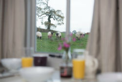 glamping-in-luxury-shepherds-huts-devon-with-classic-glamping-super-sky-views
