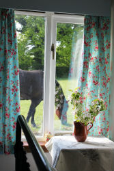 glamping-kent-the-old-apple-shed-view-from-window-horse-s