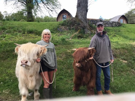 HIGHLAND CALVES IN LOCKDOWN Glamping Scotland